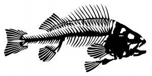 Лунный календарь ловли рыбы
