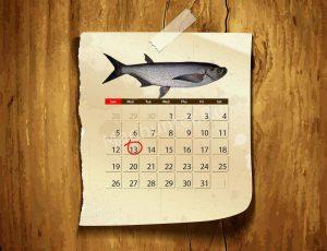 Календарь клёва чехони