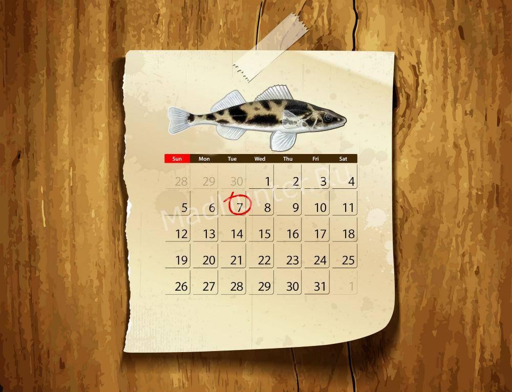 Календарь клёва рыбы Чоп
