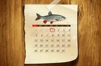 Календарь клёва Голавля