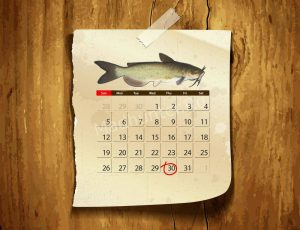 Календарь клёва Канального Сомика