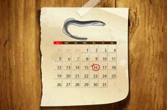 Календарь клёва Миноги Венгерской