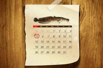 Календарь клёва Налима