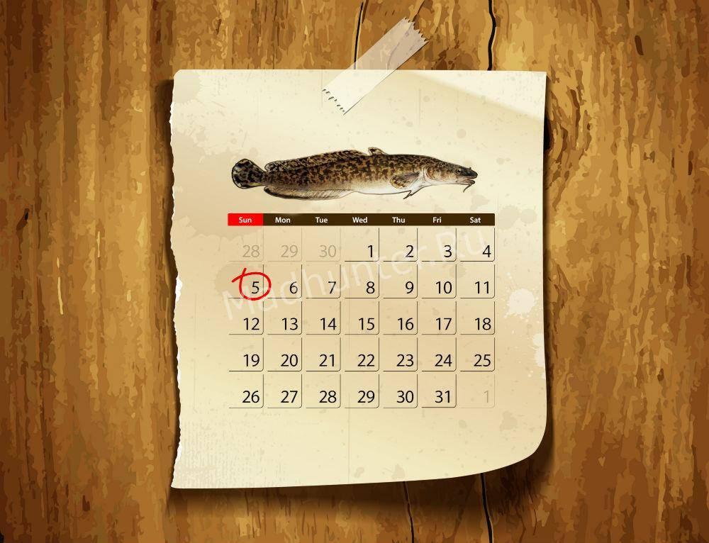 Календарь клева налима