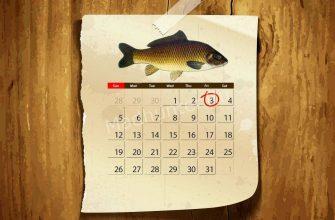 Календарь клёва Сазана