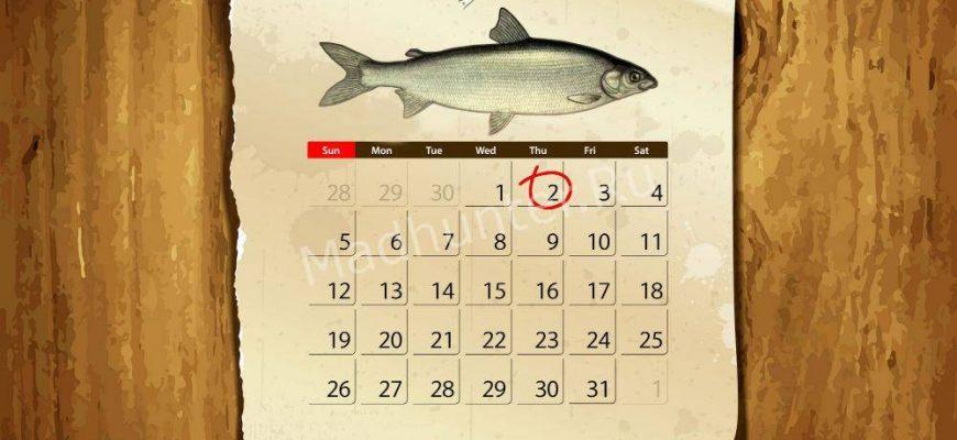 Календарь клёва Сига