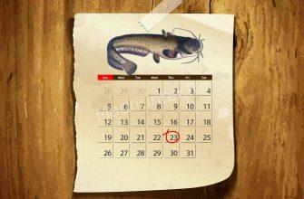 Календарь клёва Сома