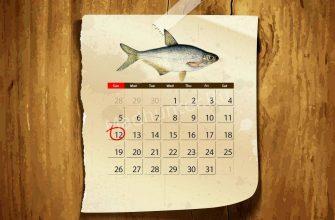 Календарь клёва сопы