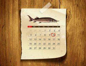 Календарь клёва стерляди