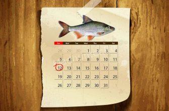 Календарь клёва Тарани