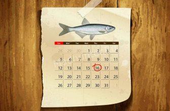 Календарь клёва Уклейки