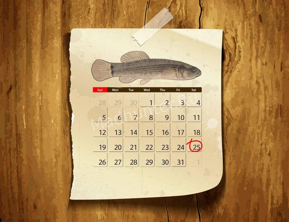 Календарь клёва Умбры