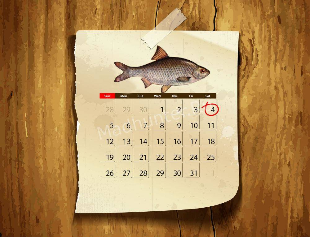 Календарь клёва Воблы