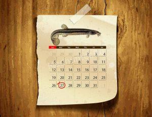 Календарь клёва Вьюна
