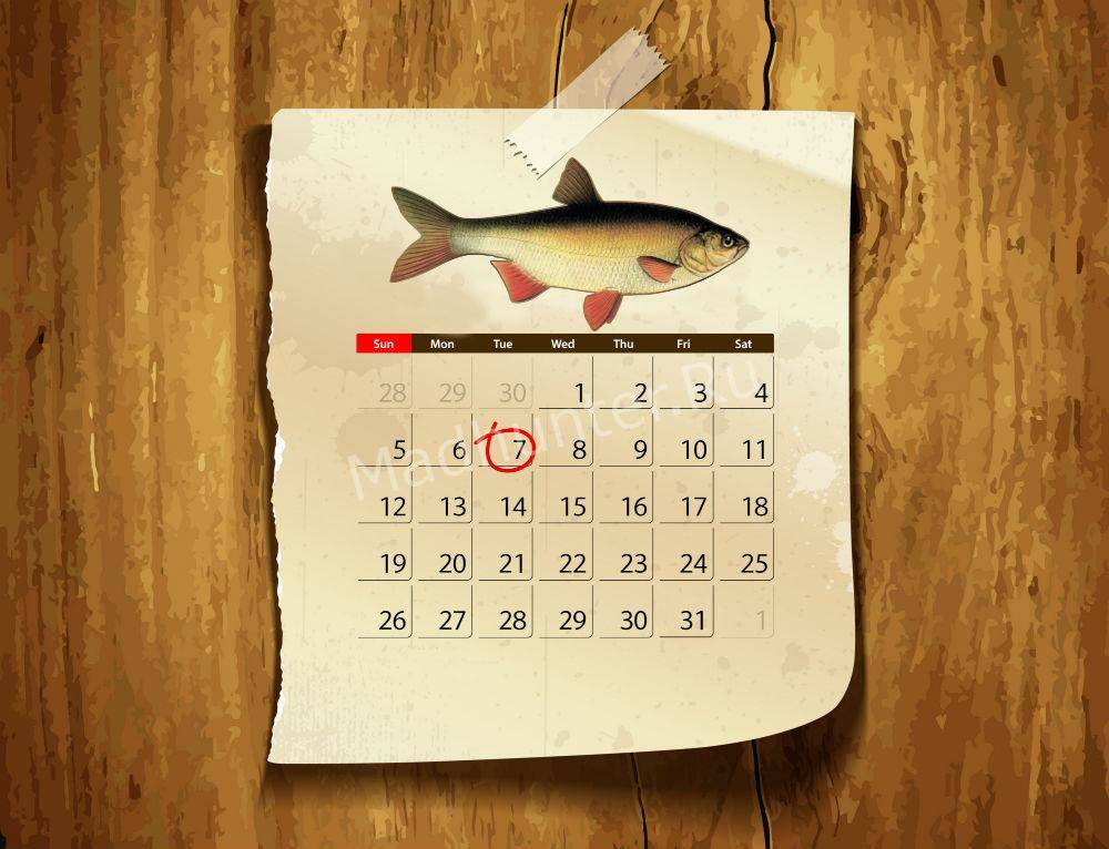 Календарь клёва Язя