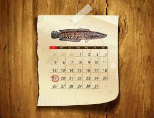 Календарь клёва Змееголова