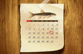 Календарь клёва ельца