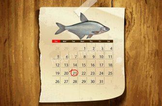 Календарь клёва густеры