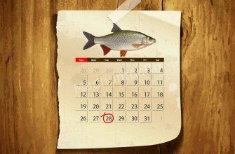 Календарь клёва плотвы