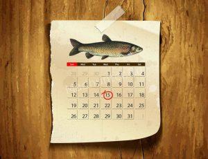 Календарь клёва Белого Амура