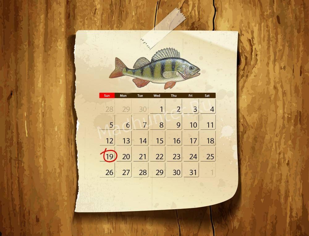 Календарь клёва Окуня