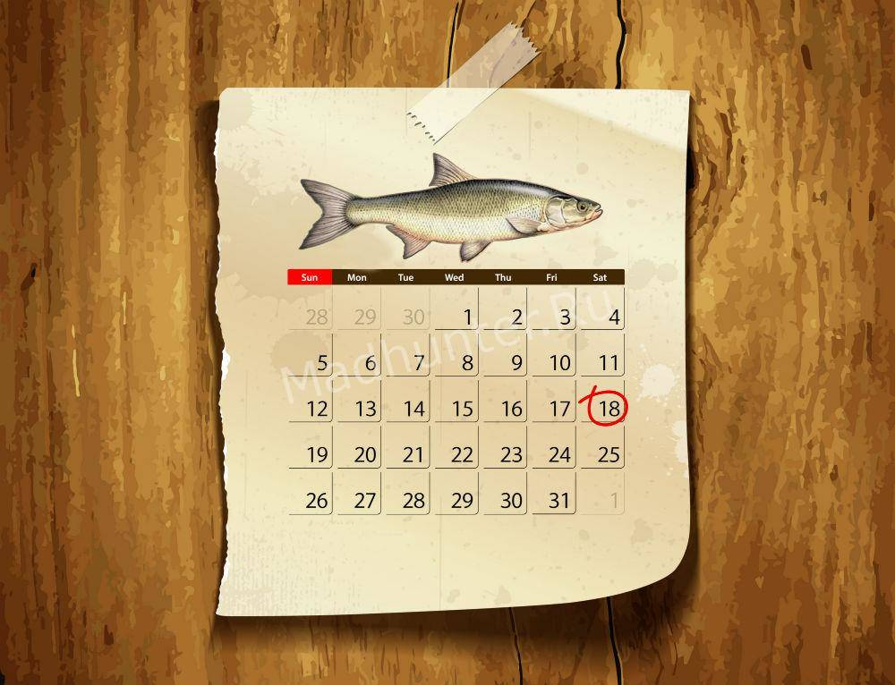 Календарь клёва Жереха