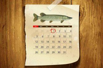 Календарь клёва щуки