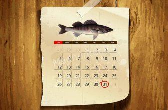 Календарь клёва Берша