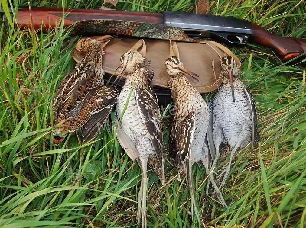 Птица Дупель охота
