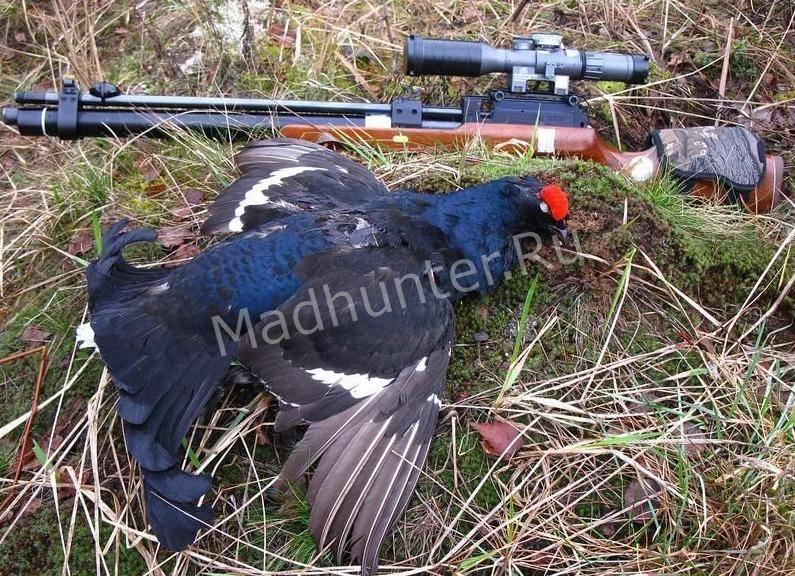 Птица тетерев охота