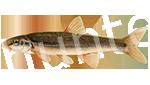 Прогноз клёва рыбы Елец