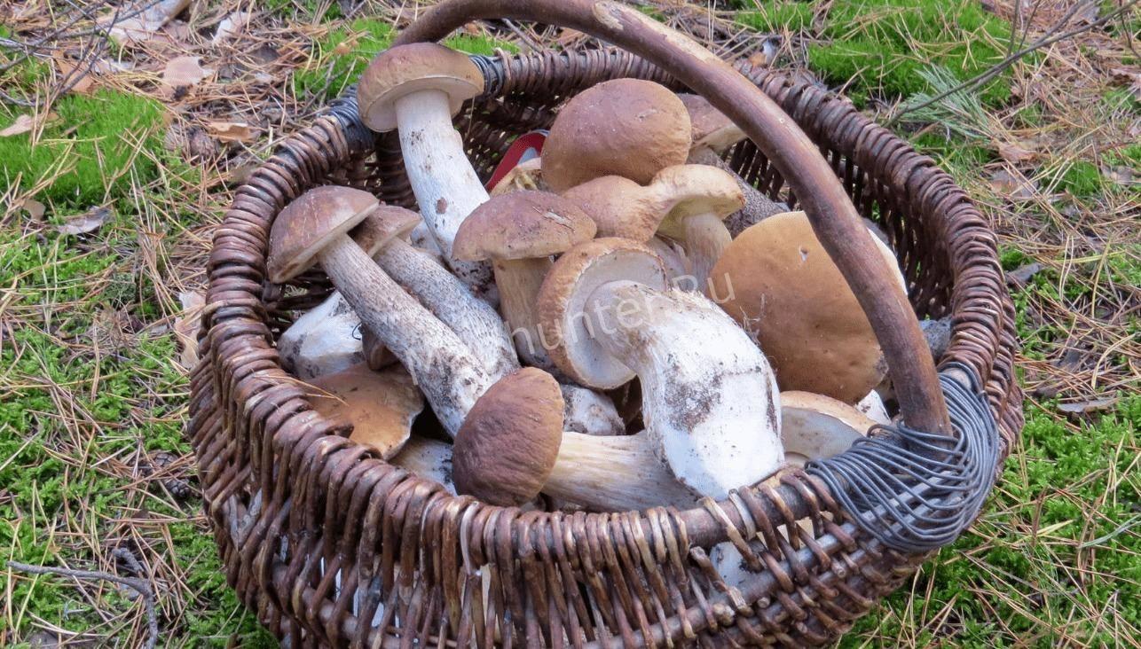 грибной сезон