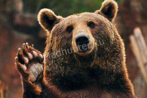 medved-pugaet-posetitelej-Habarovskogo-lesa