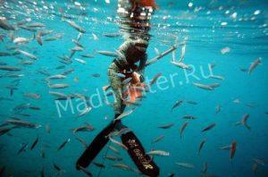 Приморский подводный турнир