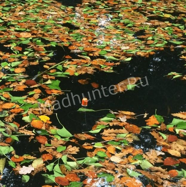 поплавок осенью