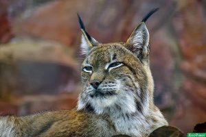 Уменьшение охотничьих угодий в Нижегородской области