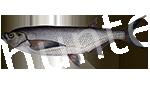 Прогноз клёва рыбы Чехонь