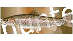 Прогноз клёва рыбы Форель