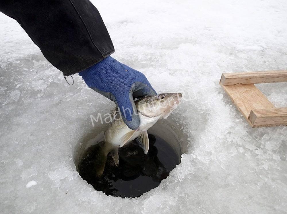Ловля судака зимой: зимние приманки для судака, техника ловли
