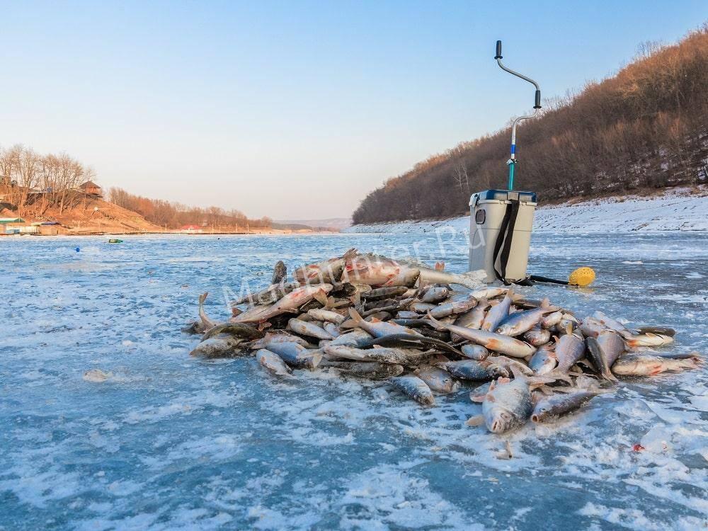 Рыбалка зимой много рыбы
