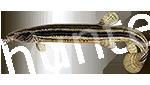 Прогноз клёва рыбы Вьюн