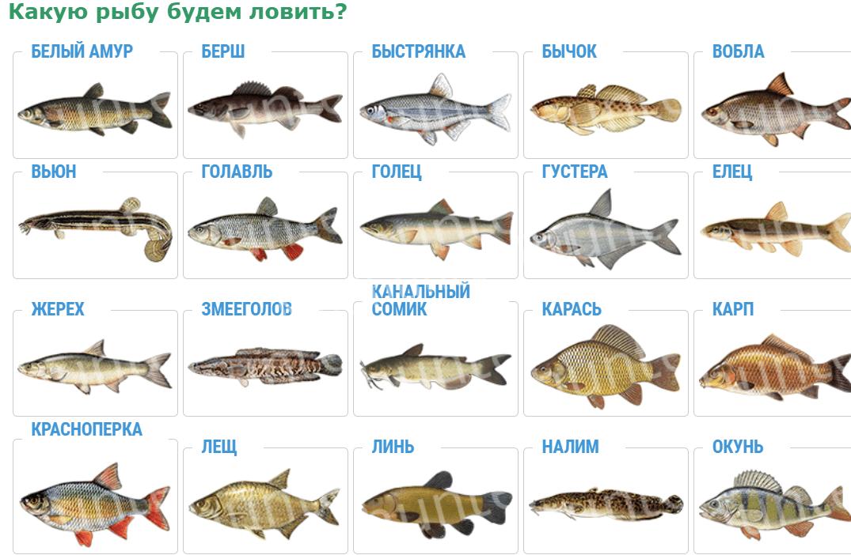 выбор рыб
