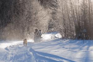 Тюменским охотникам грозит большой штраф за незаконную зимнюю охоту