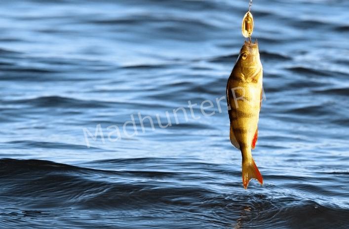 ГИМС предупреждает рыбалка