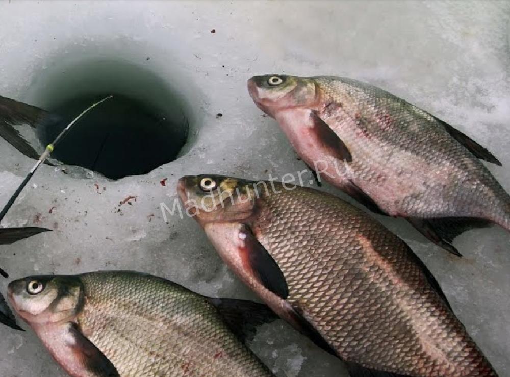 Все о рыбалке: Ночная ловля леща зимой