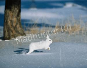 Тамбов приглашает на зимнюю охоту-min