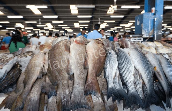 Теперь дальневосточную рыбу будут поставлять по Северным морским путям-min