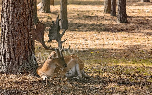 Уголовное дело за убитого оленя-min