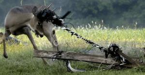 Животные гибнут только от рук человеческих-min