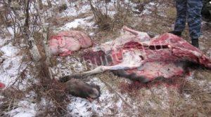 Браконьерам не удалось уйти от правосудия во время погони грузовик с охотниками перевернулся